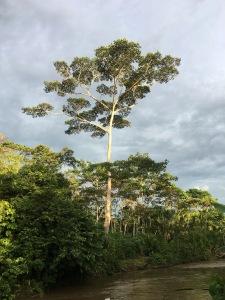 Amazontreeenarriver